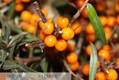 How to store sea buckthorn