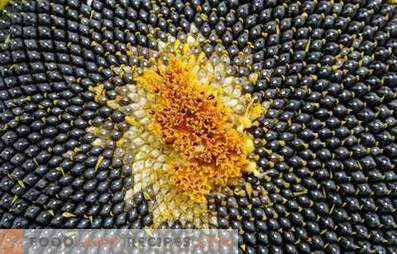 Zonnebloempitten: voordeel en schade